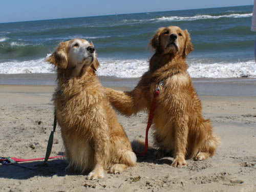 spice and lark at the beach