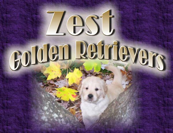 zest golden retrievers title